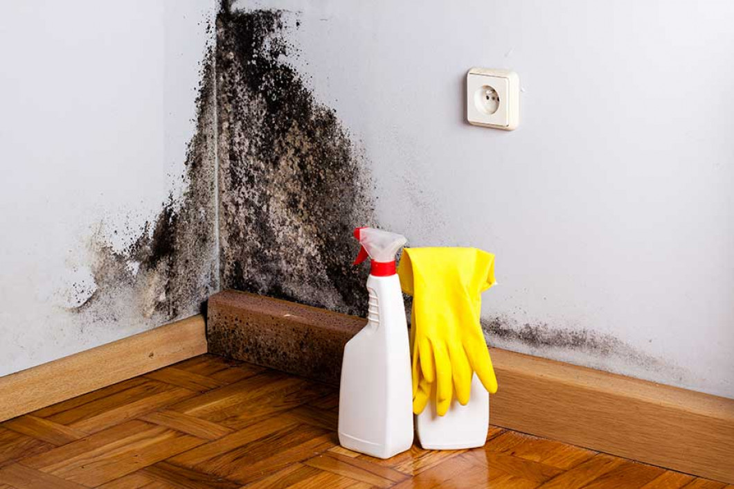 mold removal in reston va